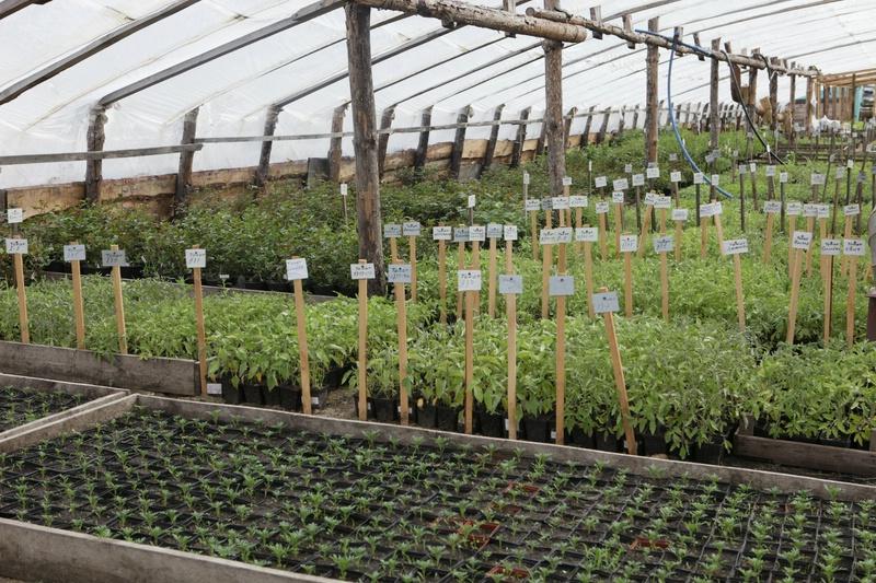 Рассада помидор - выращивание из 37