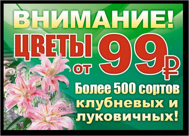 Внимание! Цветы от 99 рублей! Более 500 сортов клубневых и луковичных!