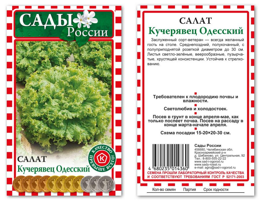 Салат кучерявец одесский выращивание из семян 41