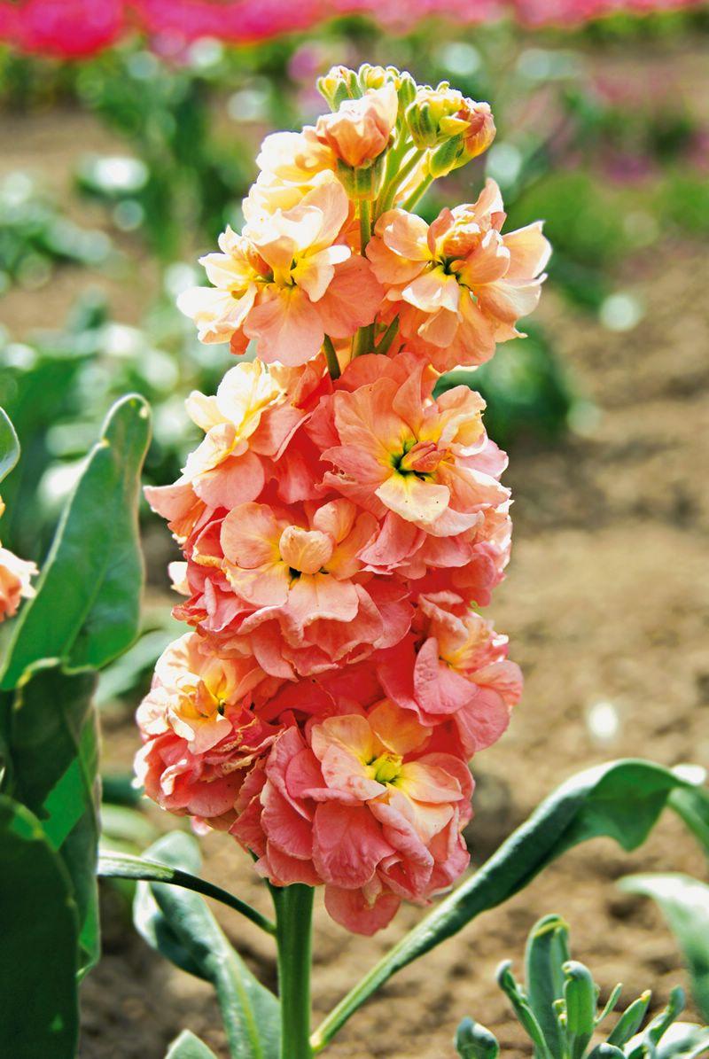 Челябинская доставка цветов