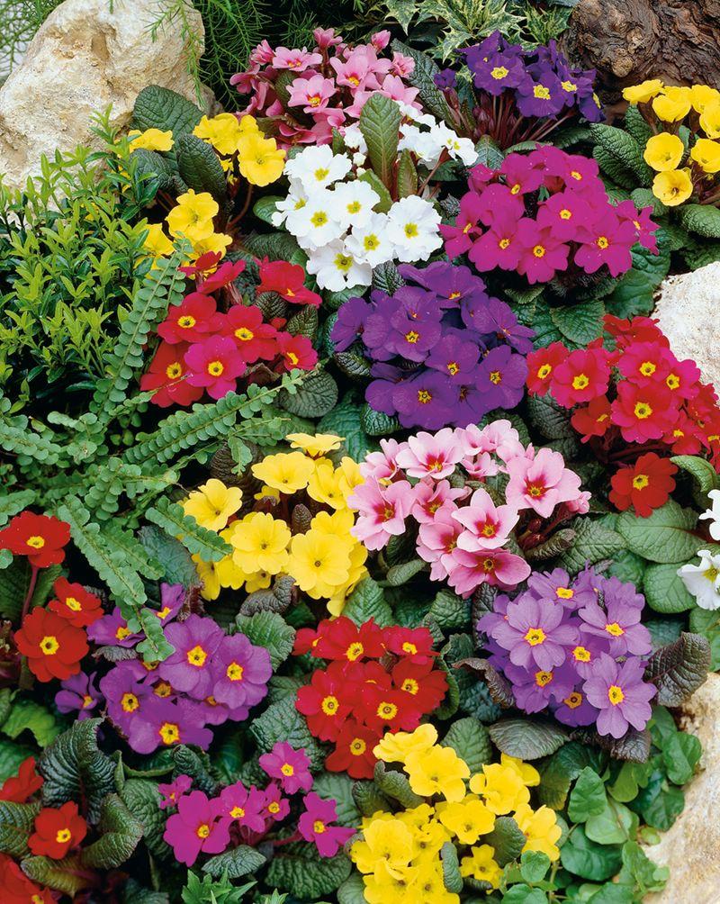 Семена многолетних цветов выписать